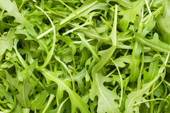 Ruccola wallpaper. Full frame wallpaper of rucola leaves in top view stock photos