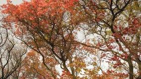 Ruch jesieni ulistnienie na drzewach w lesie zbiory