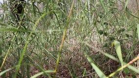 Ruch między suchymi liśćmi w drewnach zbiory wideo