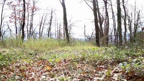 Ruch między suchymi liśćmi w drewnach zdjęcie wideo
