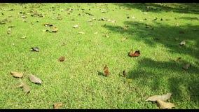 Ruch nad trawą i suszy liście zbiory wideo