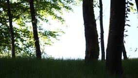 Ruch piękny plamy słońca połysk przez dmuchania zdjęcie wideo