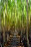 Ruch plamy tło głęboki Halloweenowy ulubione miejsce - zielony drewniany las Obraz Stock