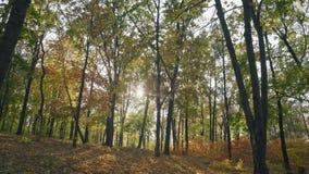 Ruch, Yellowed ulistnienie Lata od drzew ziemia w jesień lesie zdjęcie wideo