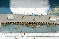 ruche photos libres de droits