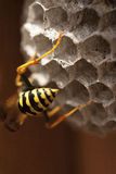 Ruche 6 d'abeille Photos stock