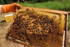 Ruche avec du miel Photo stock