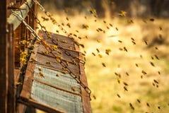 Ruche d'abeille photo stock