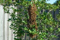 Ruche d'abeille Photographie stock libre de droits