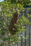 Ruche d'abeille Photos libres de droits