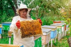 Ruche de femme d'apiculteur et cadre de contrôle de peigne Nid d'abeilles rucher Images stock