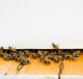 Ruche et abeille Photographie stock libre de droits