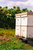 Ruche par les abeilles photos libres de droits