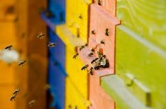Ruche slovène d'abeille photographie stock libre de droits