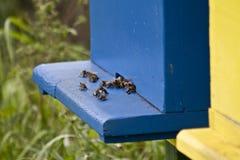 Rucher d'abeille Images libres de droits