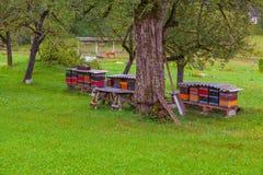 Rucher dans un village de montagne, Slovénie Image libre de droits