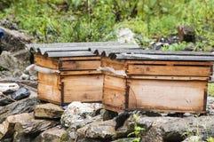 ruches Photo stock