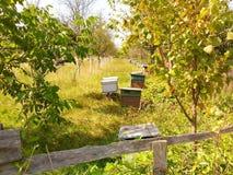 ruches Image libre de droits