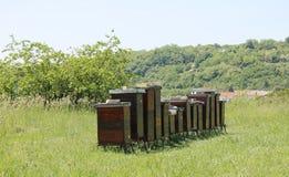 ruches photos libres de droits