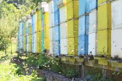 Ruches avec des abeilles Images stock