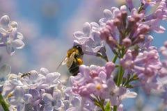 ruches avec des abeilles sur des fleurs photographie stock libre de droits