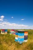 Ruches d'abeille Image libre de droits