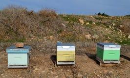 Ruches d'abeille Photos stock