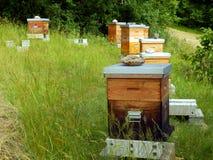 Ruches d'abeille Photos libres de droits