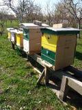 Ruches d'abeille photographie stock libre de droits