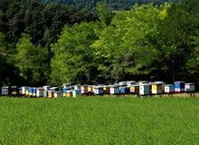 Ruches d'abeille de miel Images stock