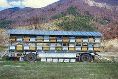 Ruches et tout autre appareil de l'apiculture pour des abeilles d'élevage Image libre de droits