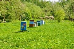 Ruches sur la pelouse verte dans la Musée-réservation Leninskie Gorki Photographie stock libre de droits