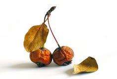 Ruck a fruta Imagens de Stock Royalty Free