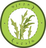 Rucola vector illustratie