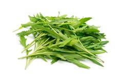 Rucola, arugula. Fresh rucola or arugula on white background Stock Photos
