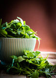 Rucola in bowl Stock Images
