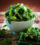 Rucola in bowl Stock Image