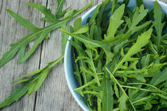 Rucola Stock Photos