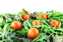Rucola ,Chard and cherry tomatoes salad Stock Photo