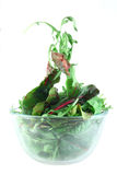 Rucola and Chard salad lightness concept. Rucola and Chard in bowl flying salad lightness concept Royalty Free Stock Photo