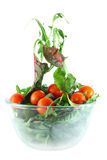 Rucola, Chard and tomatoes salad lightness concept. Rucola, Chard and cherry tomatoes in bowl flying salad lightness concept Royalty Free Stock Photography