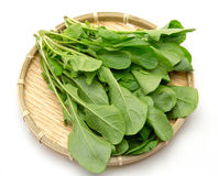 Rucola in a colande Royalty Free Stock Photography
