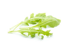 Rucola. Green rucola leaves isolated on white background stock images