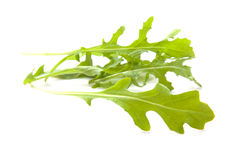 Rucola Royalty Free Stock Photography