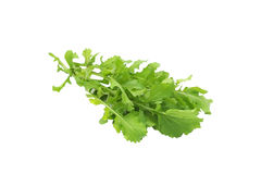 Rucola isolated on a white background Stock Photo