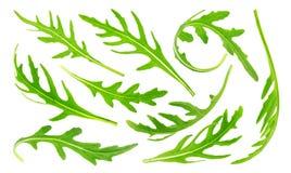 Rucola isolerade på vit bakgrund, samling Gräsplan lämnar arugula att ställa in, den stora samlingen Royaltyfri Bild