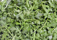 Rucola leaves Stock Photography