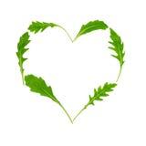 Rucola Rughetta, Arugola, φύλλα Ruccola υπό μορφή καρδιάς Στοκ Εικόνες