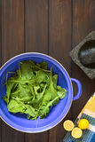 Rucola in Strainer Stock Image