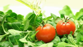 Rucola, tomatoes and olive oil stock footage